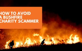 bushfire charity scammer