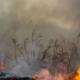 Good2Give makes it easy for British and Americans to donate to Australian bushfire appea