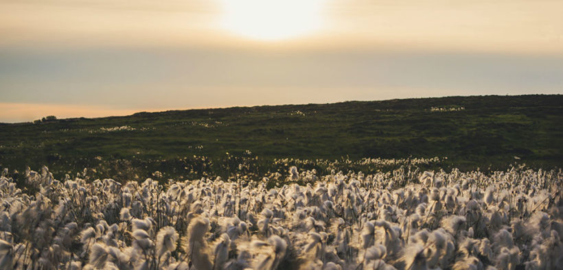 Cotton community