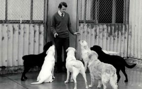 Guide dog instructor John Gosling with Dogs