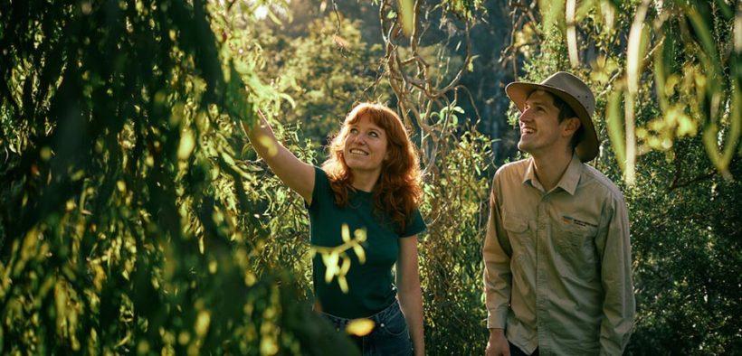 bush heroes