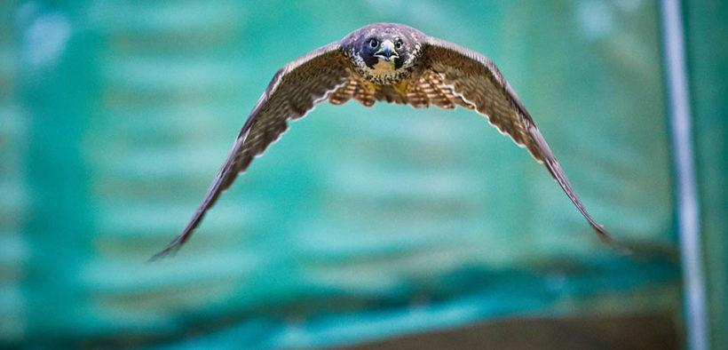 free flight aviary