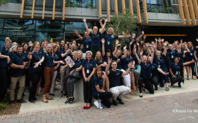 Royal Far West, one of the best places to work in AU, NZ