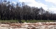 bushfire-impacted