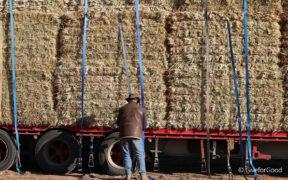 Rural Aid