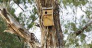 virtually plant a tree